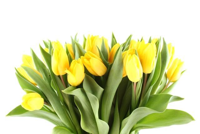 8 Марта, праздник, цветы, желтые скачать
